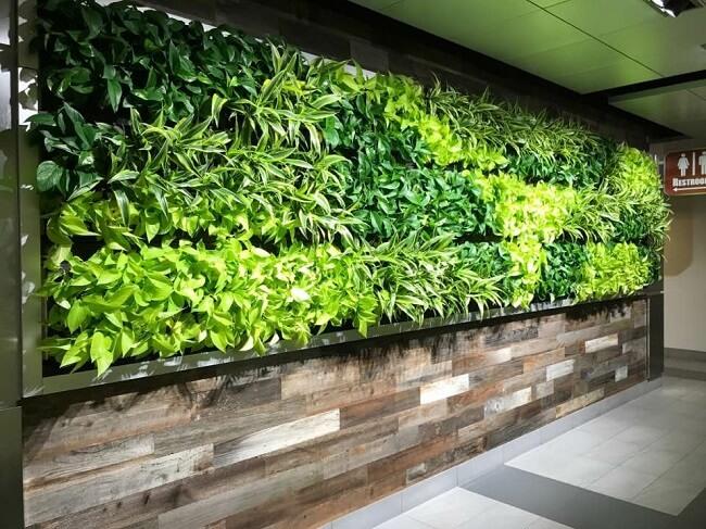 طراحی و اجرای دیوار سبز